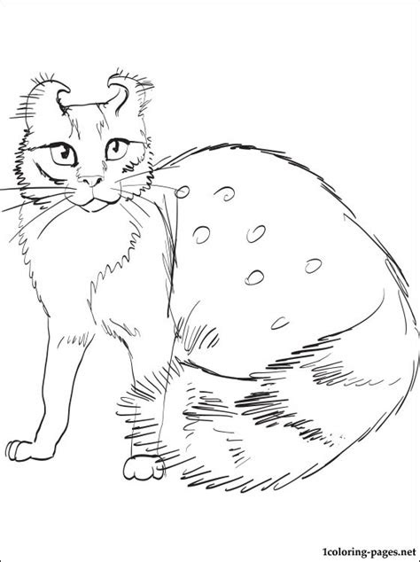 american curl cat coloring page coloring pages