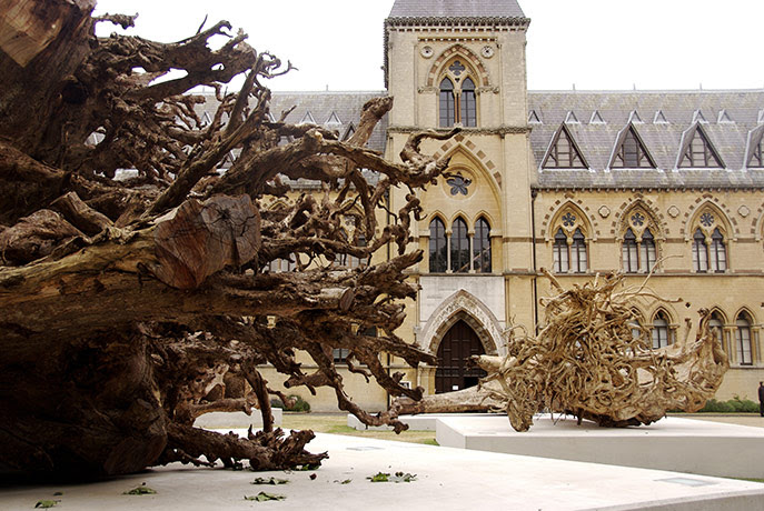 Ghost Forest: installation by Angela Palmer made of stumps from Ghana's rainforest