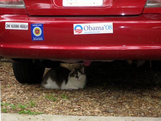 liberal cat
