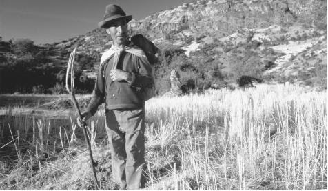 A farm worker stands in a harvested field holding a threshing  fork. About one-third of Peru's workforce traditionally consisted of  farmers.