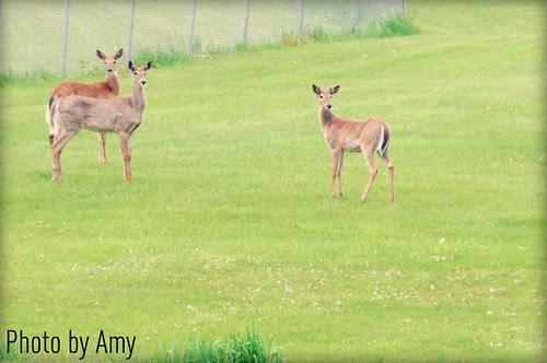 Amy 1 Surprise