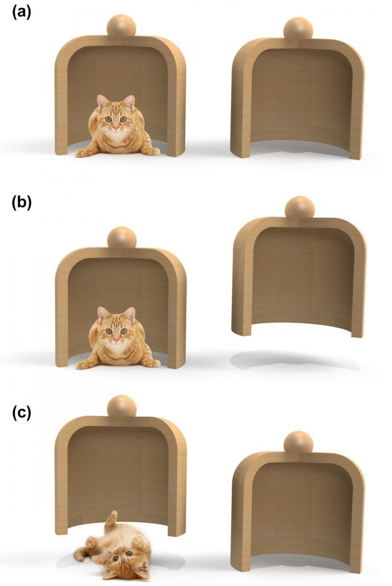 A equipe de Bonn desenvolveu um esquema que mede indiretamente a posição de um átomo. Em essência, procuram onde o átomo de césio não está. A imagem esclarece este procedimento. Vamos supor que dois recipientes estão em frente de nós e um gato está escondido sob um deles (a). No entanto, não sabemos em qual. Se levantamos o direito (b) e o vemos vazio, concluímos que o gato deve estar no jarro esquerdo e ainda não foi perturbado. Se levantamos a jarra esquerda em vez disso, perturbamos o gato (c), e a medição deve ser descartada. No mundo da macro-realista, este esquema de medição teria absolutamente nenhuma influência sobre o estado do gato, que permaneceria imperturbável o tempo todo. No mundo quântico, no entanto, uma medida negativa que revela a posição do gato, como em (b), já é suficiente para destruir a superposição quântica e influenciar o resultado da experiência