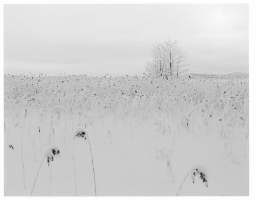 snowyJarviRuoko180mm2
