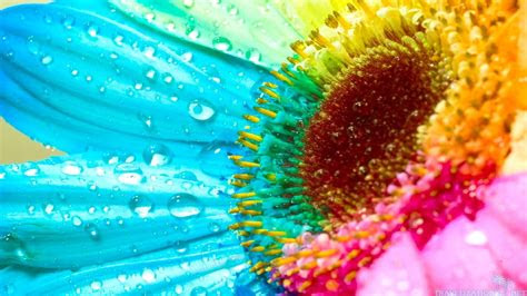 pictures  rainbow flowers