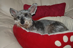 Brewster likin' his new bed!