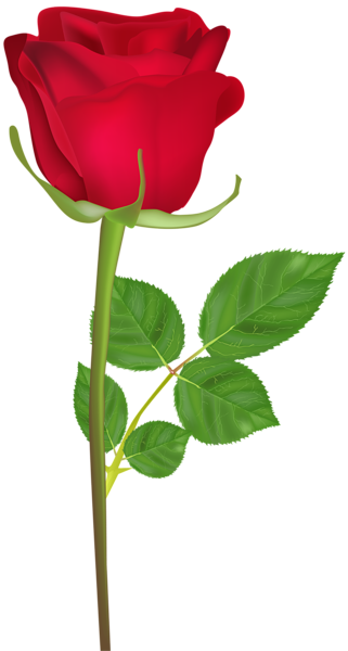 Rose Png Flower Images Free Download