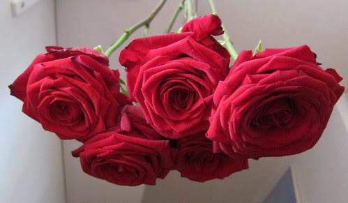 Ruusut talteen