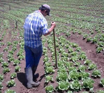 agricultor 1