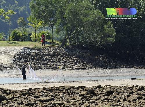 Laying out driftnets across Berlayar Creek
