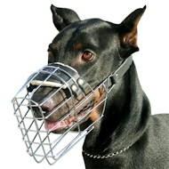 Luftbruecke-fuer-Hunde e.V. » Blog Archiv » Wir brauchen
