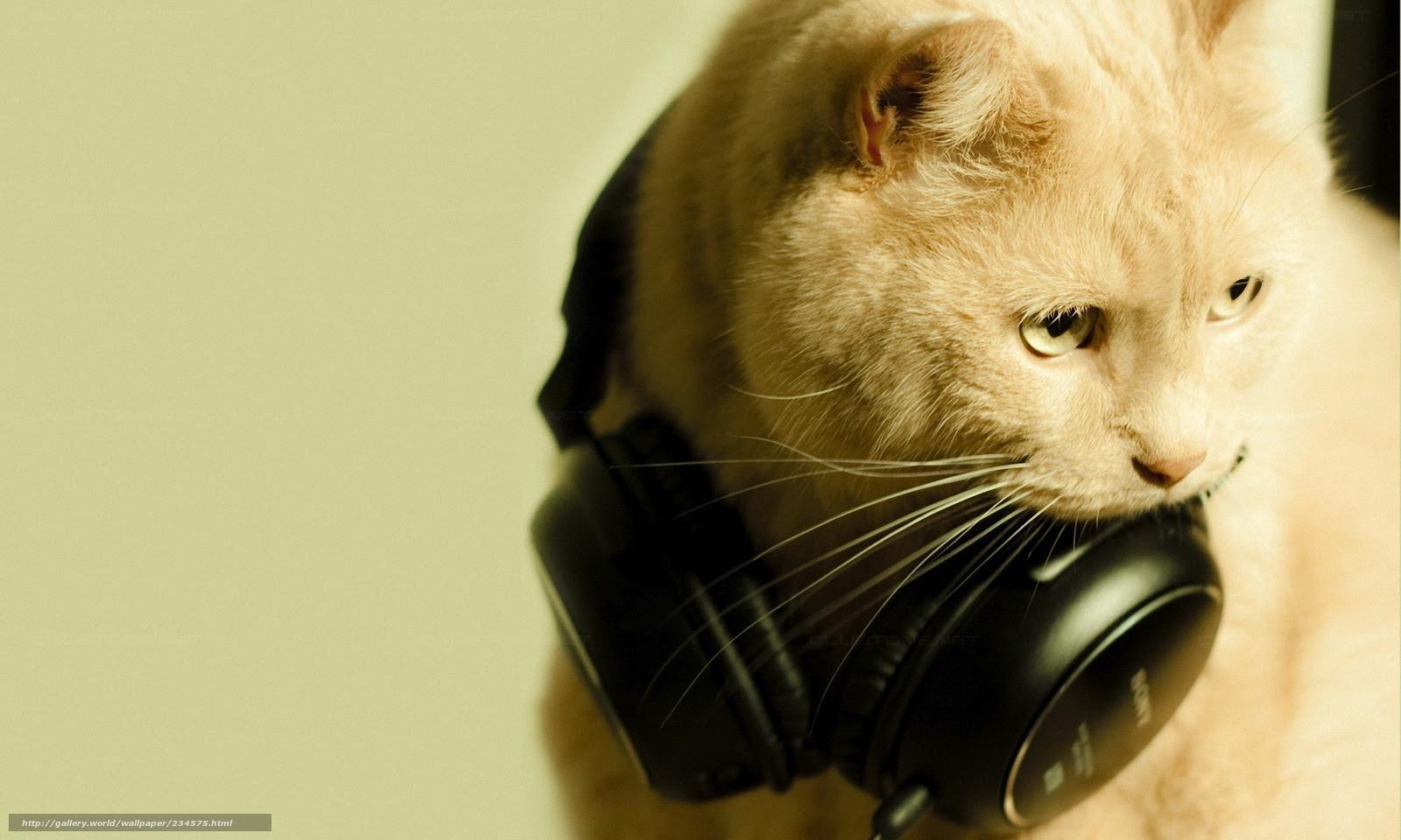 壁紙をダウンロード 猫 ヘッドフォン マクロ デスクトップの解像度の
