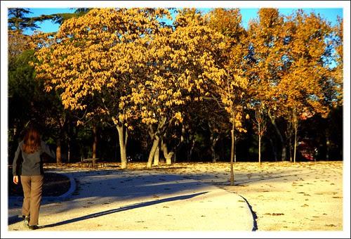 la tarde declina en el parque del santo