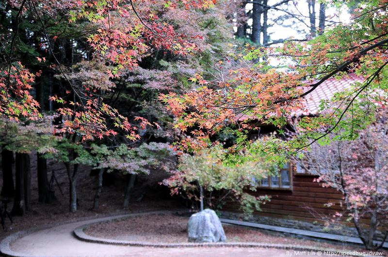 福壽山農場楓紅-1