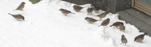 birds in the winter