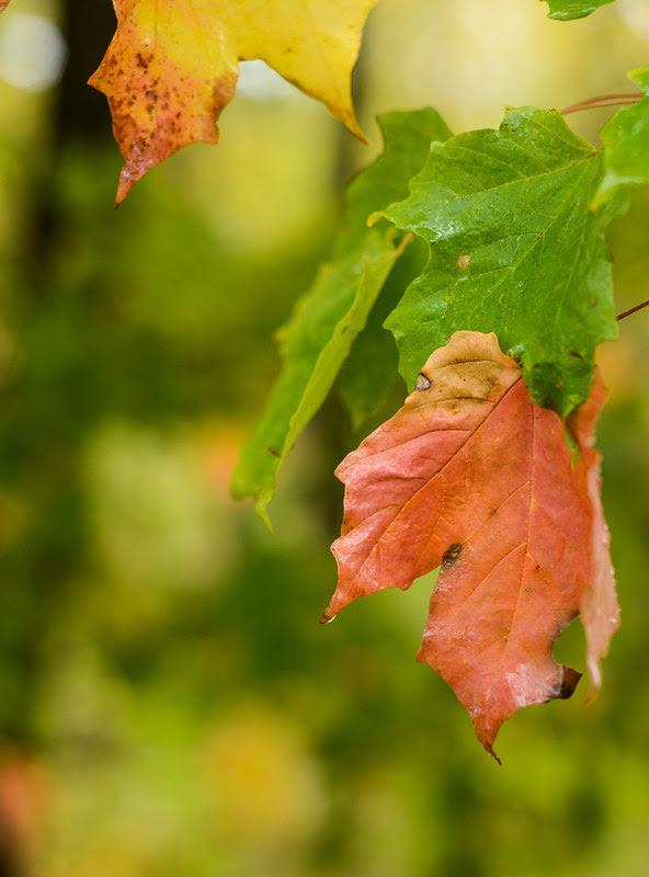 Wet Autumn Day