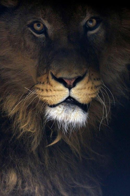 Ο βασιλιας των ζωων