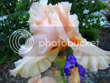 Flowers, Beautiful Flowers photo 837ea020.jpg