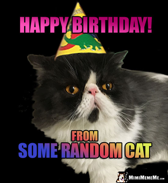 Cat Birthdays Are Funny Happy Purr Day Humor Hilarious Cat B Day