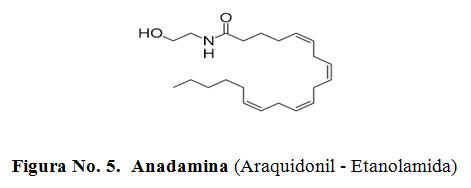 Anadamina (Araquidonil - Etanolamida)