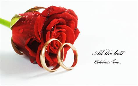 nice red roses with rings hd free wallpapers   HD Wallpaper