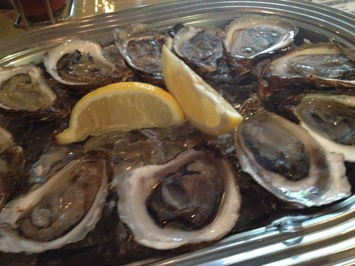 Maestro SVP - oysters