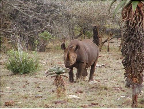b rhino 3