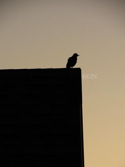 IMG_3118sunsetbird