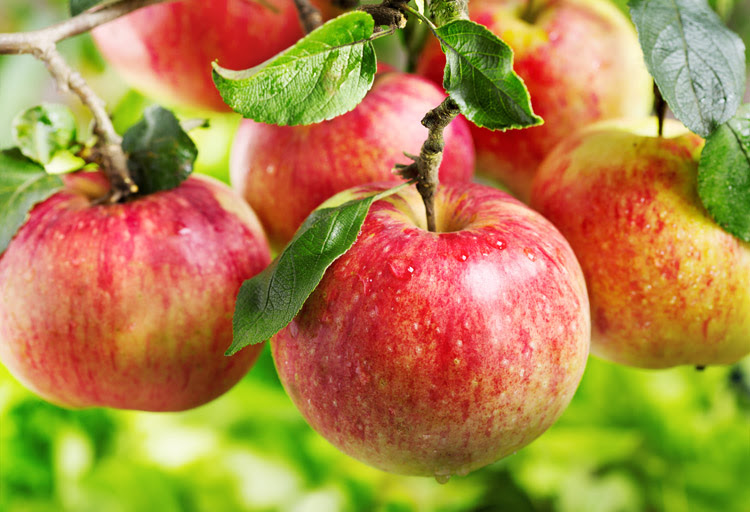 Apples: they prevent breathing issues | Photo: Shutterstock