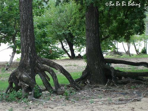 big-roots
