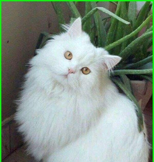 Gambar Kucing Viral godean.web.id