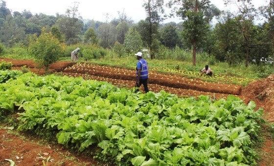 Brasil ganhou mais importância em mercados agrícolas globais