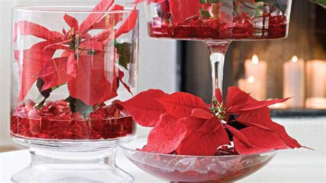 Show Off Your Poinsettias   Southern Living