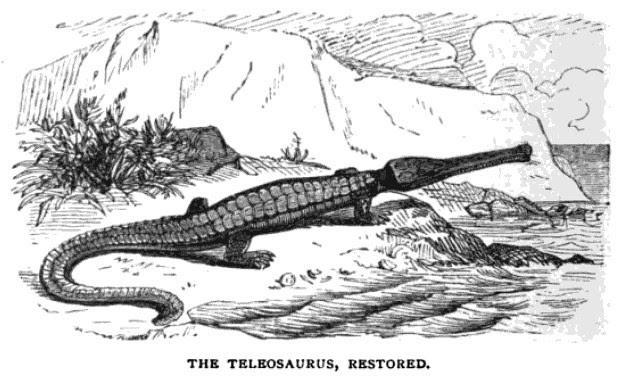 Teleosaurus