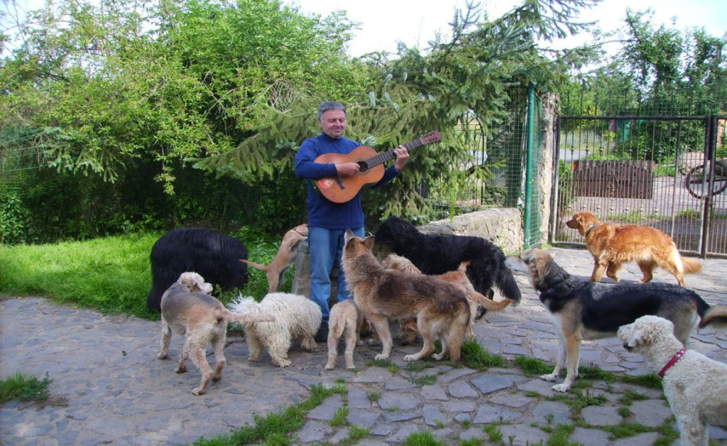 schiener gitarre 1024x628 Willkommen bei der Hundepension Neumühle