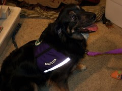 Laxy and her new vest