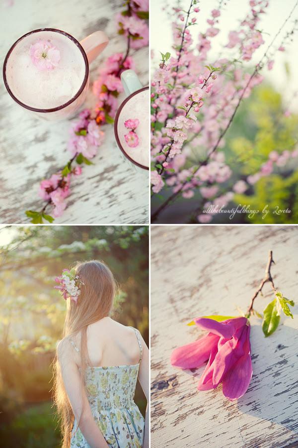 Pink Spring Blossom