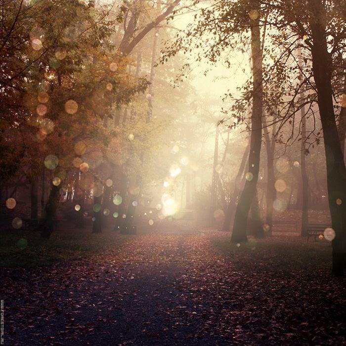 Lovely rainy forest