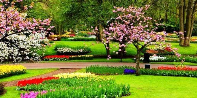 gambar sketsa pemandangan taman bunga gambar pemandangan