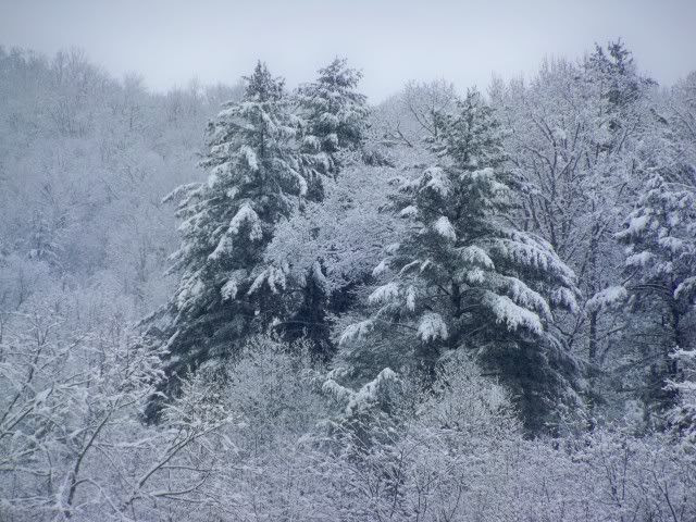 Snow covered trees near Franklin, NC on Christmas Day 2010