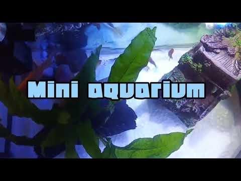 Mini Aquarium | Senegal Bichir