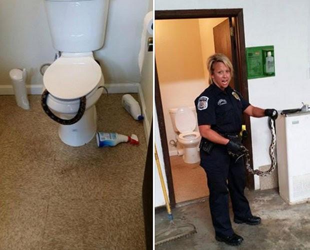 Operário ficou amedrontado depois que se deparou com uma cobra venenosa dentro da privada (Foto: Reprodução/Facebook/Hueytown Police Department)