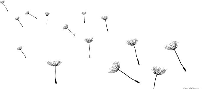 Dandelion Hd Png Transparent Dandelion Hdpng Images Pluspng