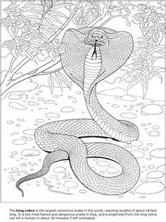 flying dinosaurs coloring book feathered reptiles