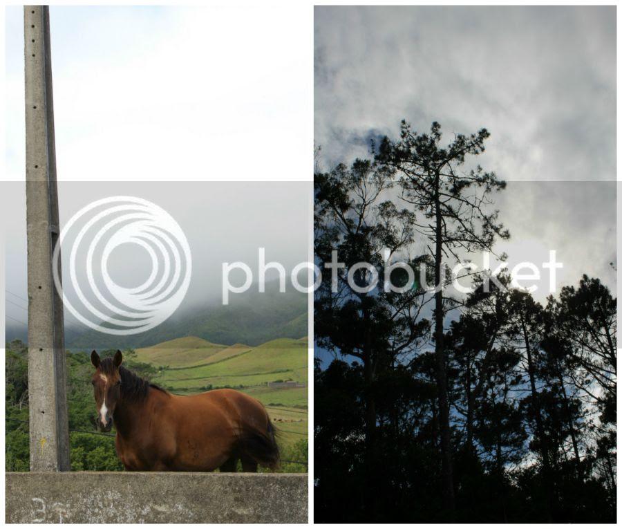 photo collage3_zpsoio3oz4r.jpg
