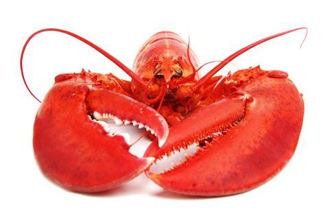 lobster png     transparent