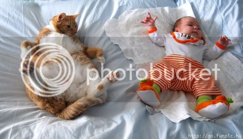 gambar kucing gemuk