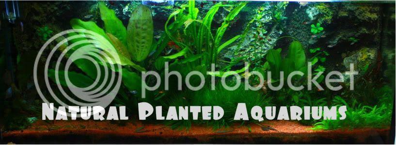 Natural Planted Aquariums