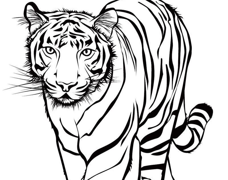 malvorlagen tiger download  amorphi