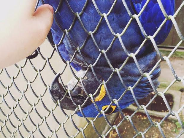 Interessados em adotar animais silvestres precisam se cadastrar no site do IAP (Foto: Divulgação/IAP)