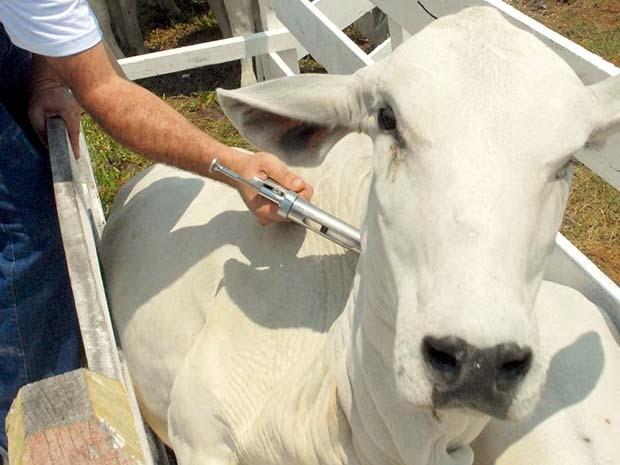 Rio Grande do Norte tem hoje um rebanho bovino de 949.954 animais. (Foto: Divulgação/Assessoria)